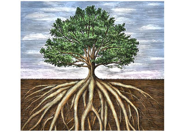 Oak-Tree-Roots